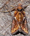 9/19/18 moth