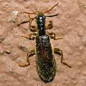 Beetle 2011.07.09.5961 - Cymatodera inornata