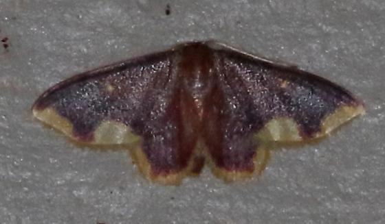Lophosis labeculata