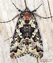 Moth - Syngrapha rectangula