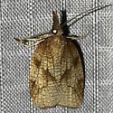 Sparganothis xanthoides - female