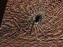 hole in cedar beam - Kukulcania