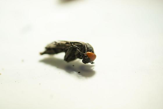 beetle?