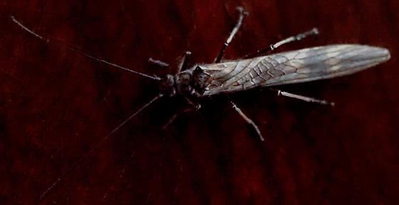 Mystery Bug Indoors