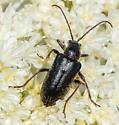 Long-horned Leaf Beetle Perhaps