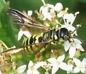 Wasp - Myzinum