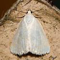 Pale Lithacodia - Protodeltote albidula