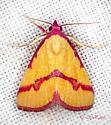 Ernestine's Moth - Phytometra ernestinana
