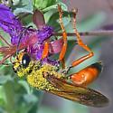 Wasp ~20mm - Sphex ichneumoneus