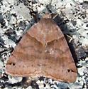 Unidentified Moth - Caenurgina crassiuscula