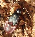 Bug Nov 13