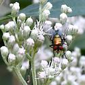 Greenbottle fly?