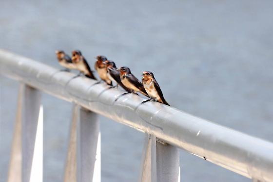 Bug Swarm_008