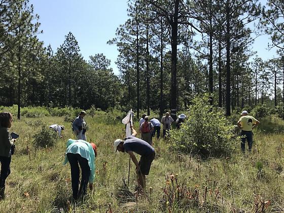 Pitcher-plant bog walk