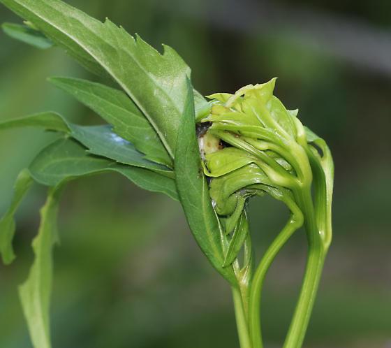 Unidentified Larva