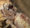 Spider Parasite?