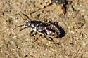 Unknown instar