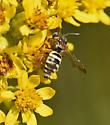 Bee 465A 0335 & 0336 - Epeolus