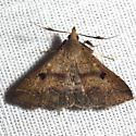 Litter Moth ? - Renia salusalis - male