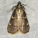 Hypsopygia olinalis