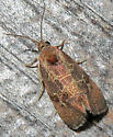 Spirea Leaftier - Evora hemidesma