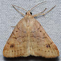 Hodges #8733 – Caenurgia chloropha – Vetch Looper Moth - Caenurgia chloropha - female