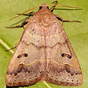 Moth ID - Phoberia atomaris