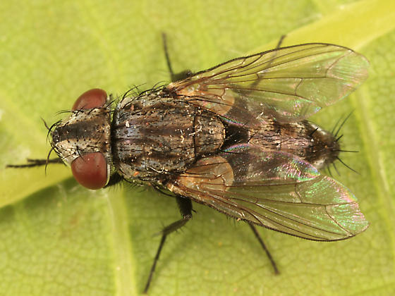 Satellite Fly - Metopia