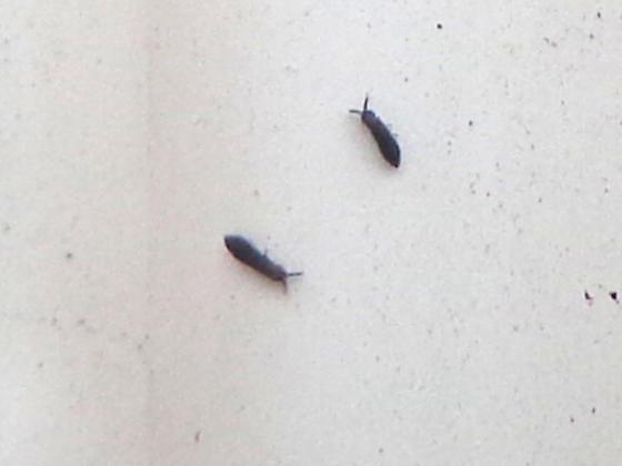 Small Gray Bugs In Kitchen Quicua Com