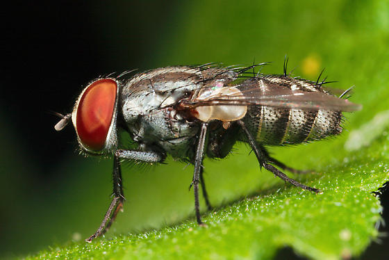 fly - Amobia