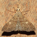 Renia fraternalis - female