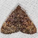 Common Idia Moth - Idia aemula