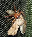 UNK Spider (w/moth)