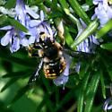 Wool Carder Bee, Anthidium manicatum - Anthidium manicatum - male