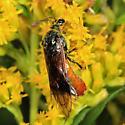 Argid Sawfly - Arge cyra - female