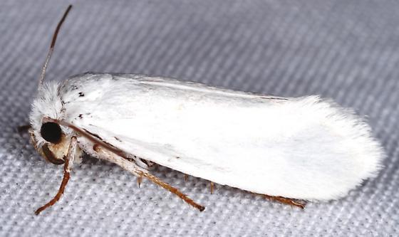 Yucca moth?