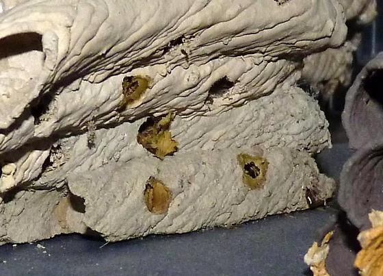 Leafcutter bee/mason bee nests?