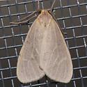 8099 - Mouse-colored Lichen Moth - Pagara simplex