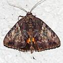 Penitent Underwing Moth - Catocala muliercula