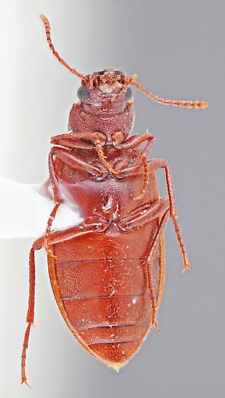 Mojave-63 - Chilometopon