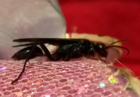 iridescent blue wasp