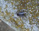 Tiny Fly? - Ogcodes