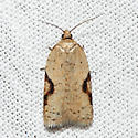 moth - Acleris