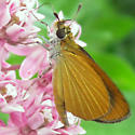 Least Skipper - Ancyloxypha numitor - male