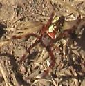 small spider in Vargas Plateau Park on 2020 June 15