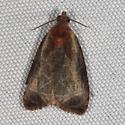 Hodges#2794  - Olethreutes inornatana