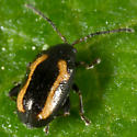 Tiny Black & Orange Beetle - Phyllotreta striolata