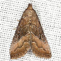 Common Pinkband Moth - Hodges #9720 - Ogdoconta cinereola