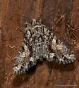 Unknown Moth - Oligia divesta