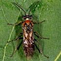 Unknown Bug - Dolerus